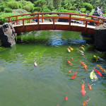 Koi Ponds Roseville